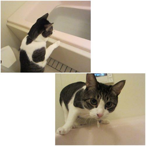 cats1_20150225203129b1c.jpg