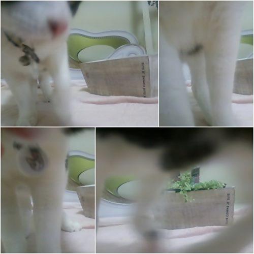 cats1_20150327182503df1.jpg
