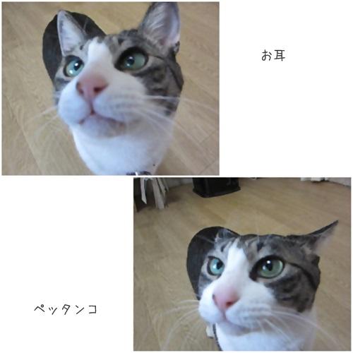 cats1_20150401175307f5f.jpg