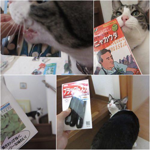 cats1_20150427203724e7c.jpg
