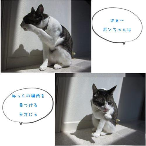 cats1_20150511213728cd97.jpg