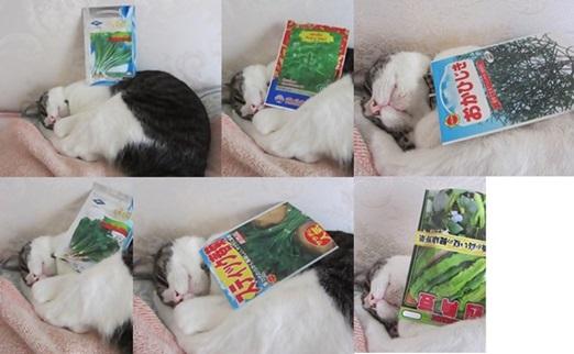 cats1_20150523200255f95.jpg