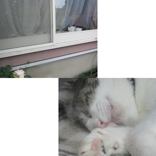 cats3_20150521190424bb6.jpg
