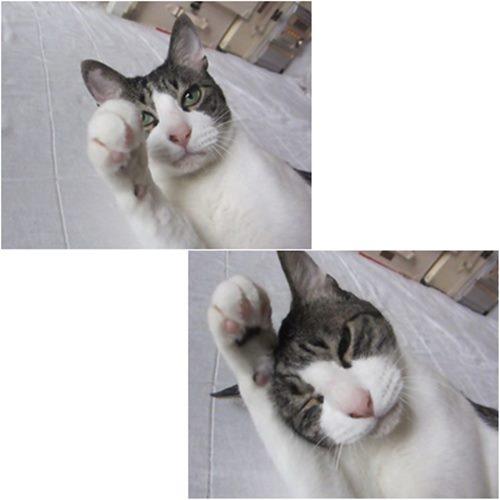 cats3_20150620195127fd0.jpg