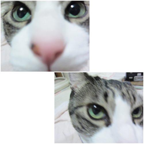 cats5_20150121202631646.jpg