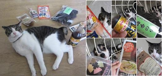 cats5_201506111935557fb.jpg