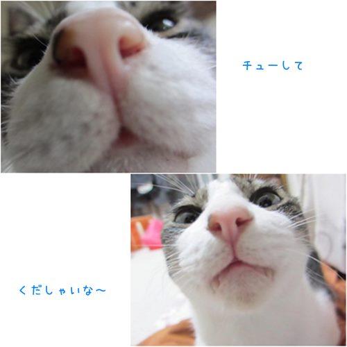 cats5_20150618171744be0.jpg