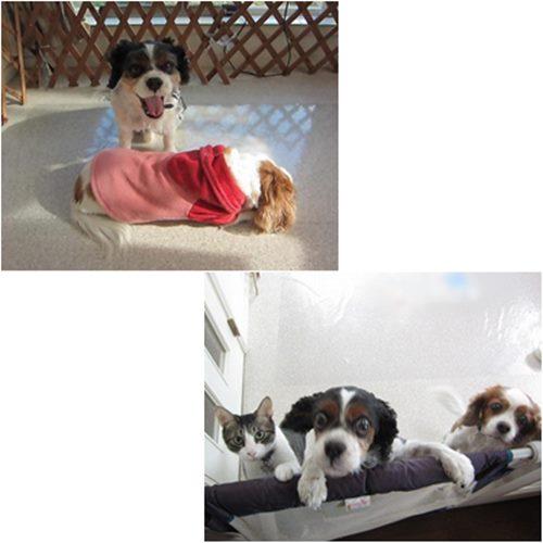 cats7_2015050820455869b.jpg