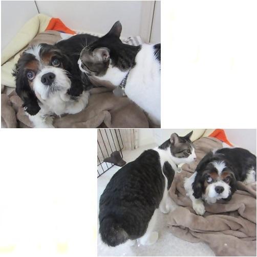 cats_20140421134531cd1r.jpg