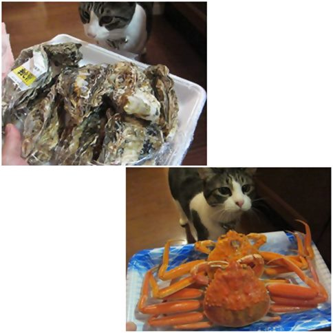 cats_20141222210255ec0.jpg