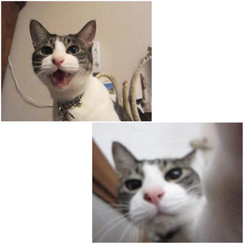 cats_2014122818421924b.jpg