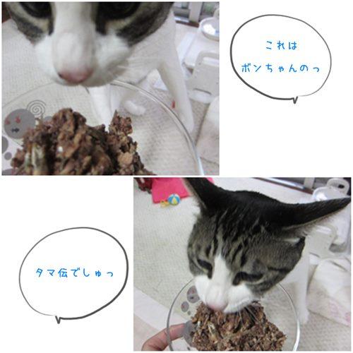 cats_20150114203647f6c.jpg