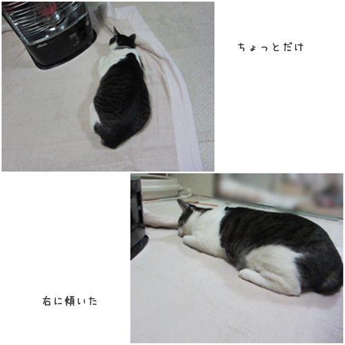 cats_20150116211342fbd.jpg