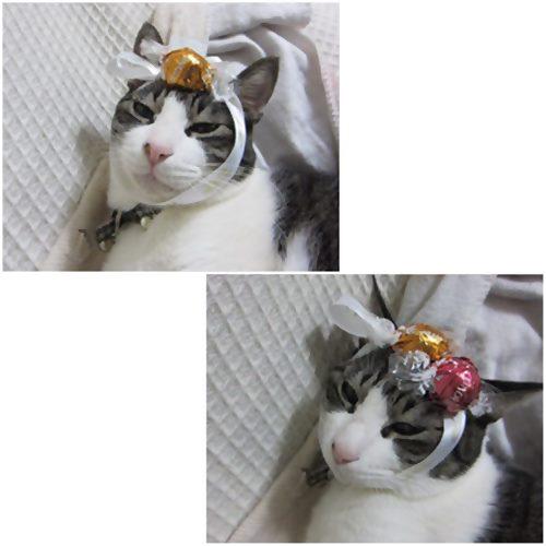 cats_20150131233748c97.jpg