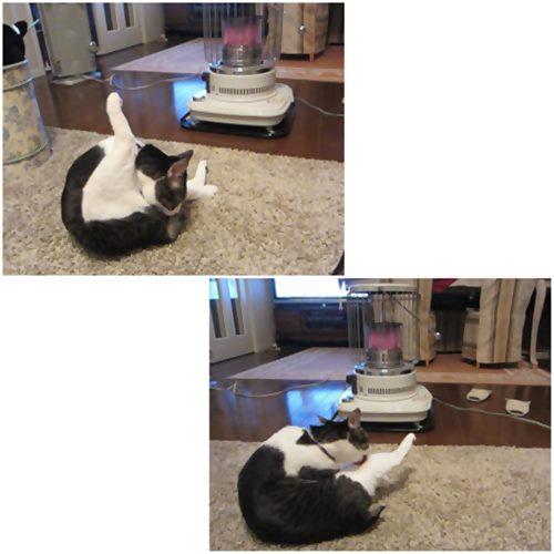 cats_20150203221709c07.jpg