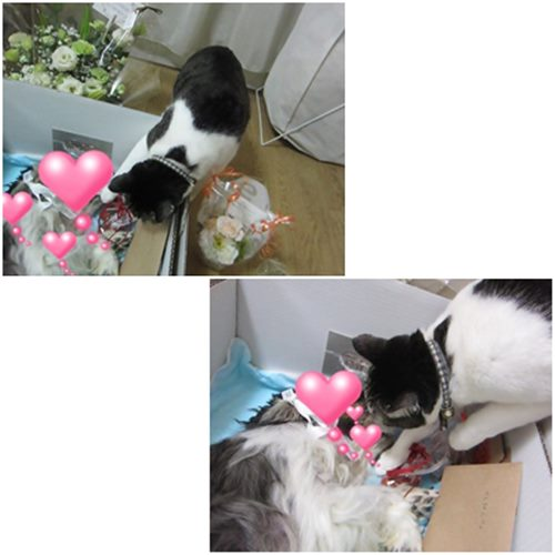 cats_20150210210111c87.jpg
