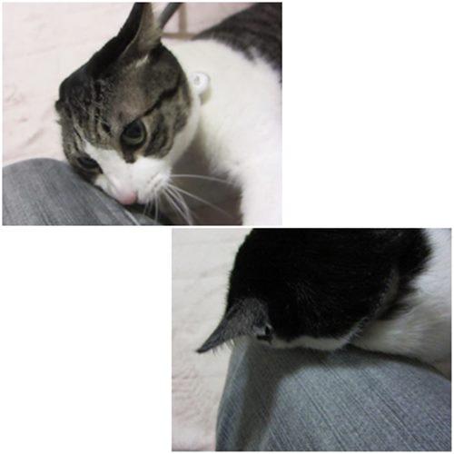 cats_20150214183622ed1.jpg