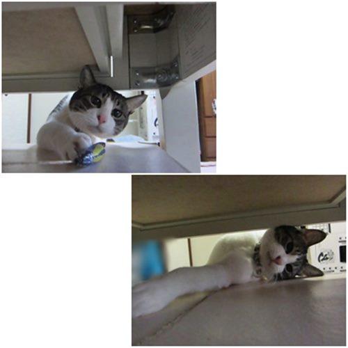 cats_20150220192704797.jpg