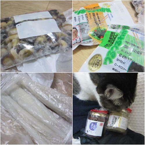 cats_201502282024521b0.jpg