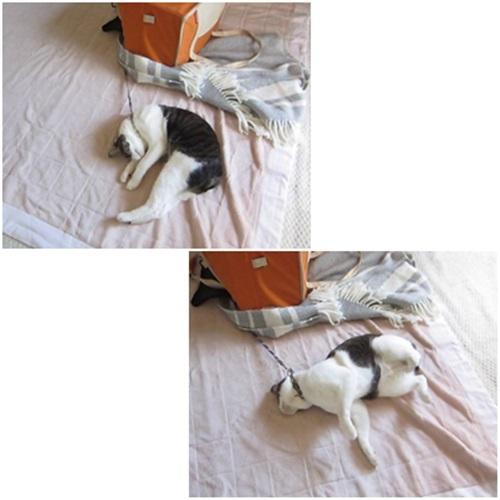 cats_20150403134156e63.jpg