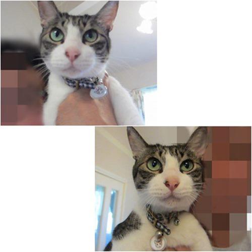 cats_20150412213335f09.jpg