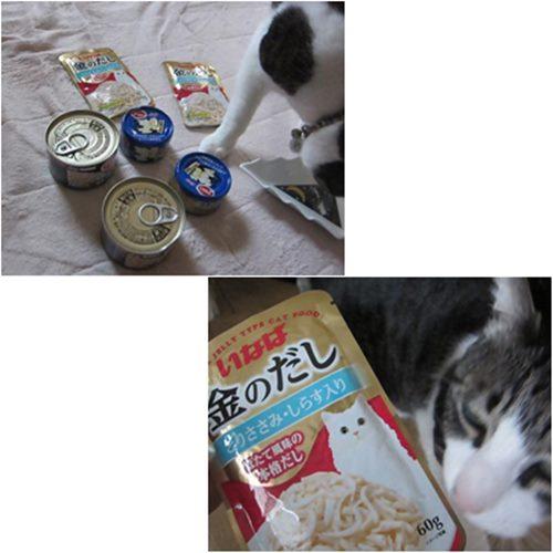 cats_20150415195318f05.jpg