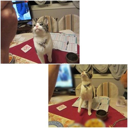 cats_20150422185621ea4.jpg
