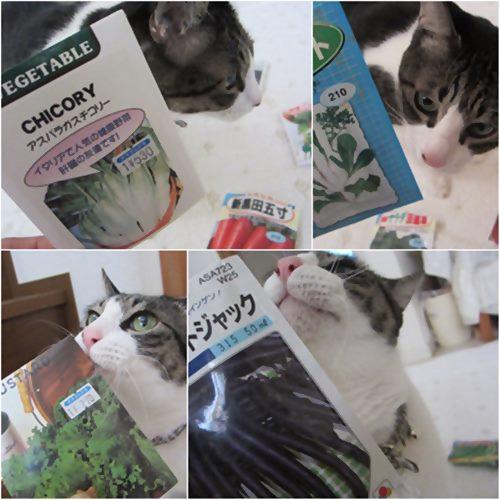 cats_20150427203723a05.jpg