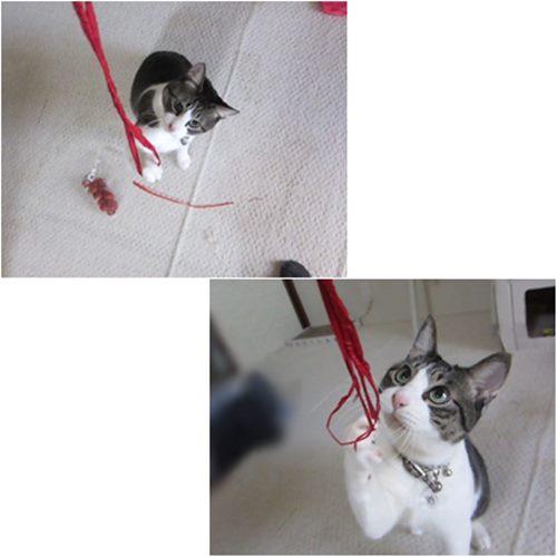 cats_201506011717095bb.jpg