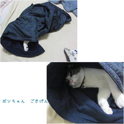 cats_20150602170328880.jpg
