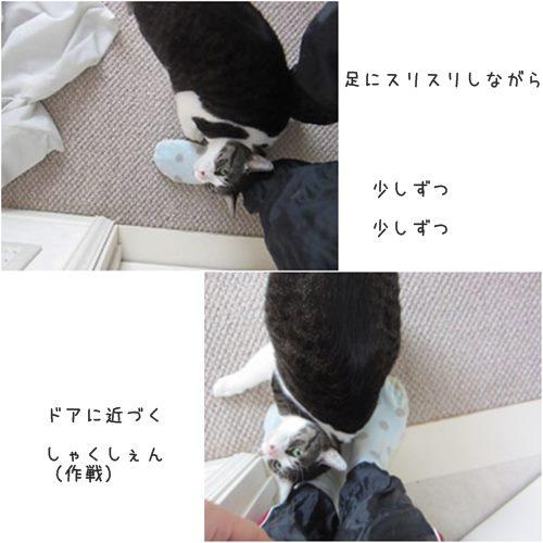 cats_2015060321270270e.jpg