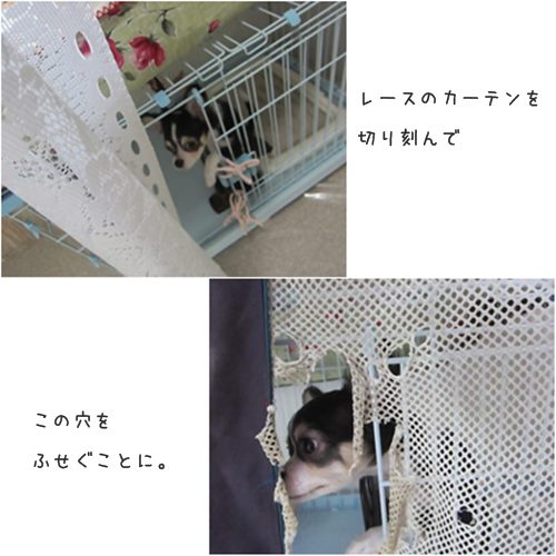 cats_20150605215846551.jpg