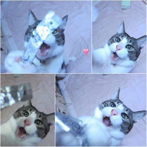 cats_20150616211316823.jpg