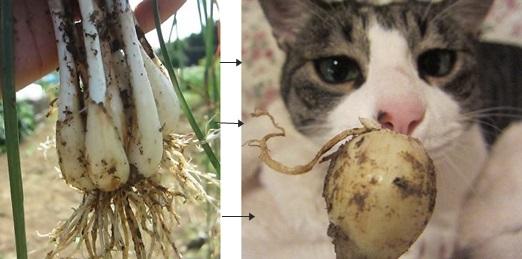 cats_20150701235747ca6.jpg