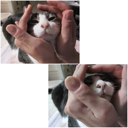 catsb_20150214200822caf.jpg