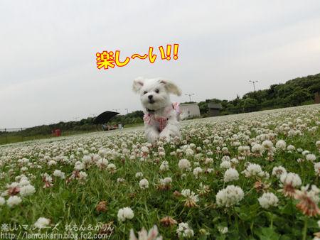 20150614_5.jpg