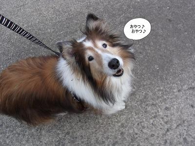 ごきげん☆
