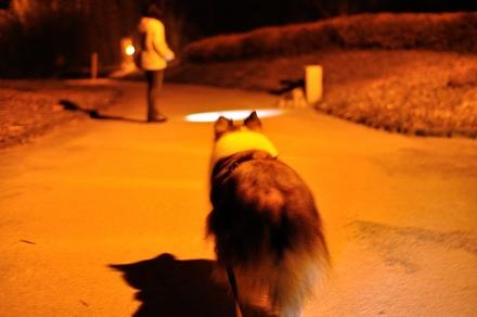 夜のエコパーク3