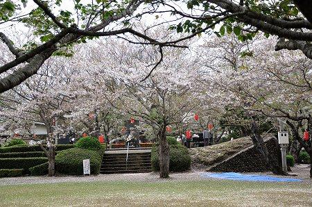 桜の絨毯4