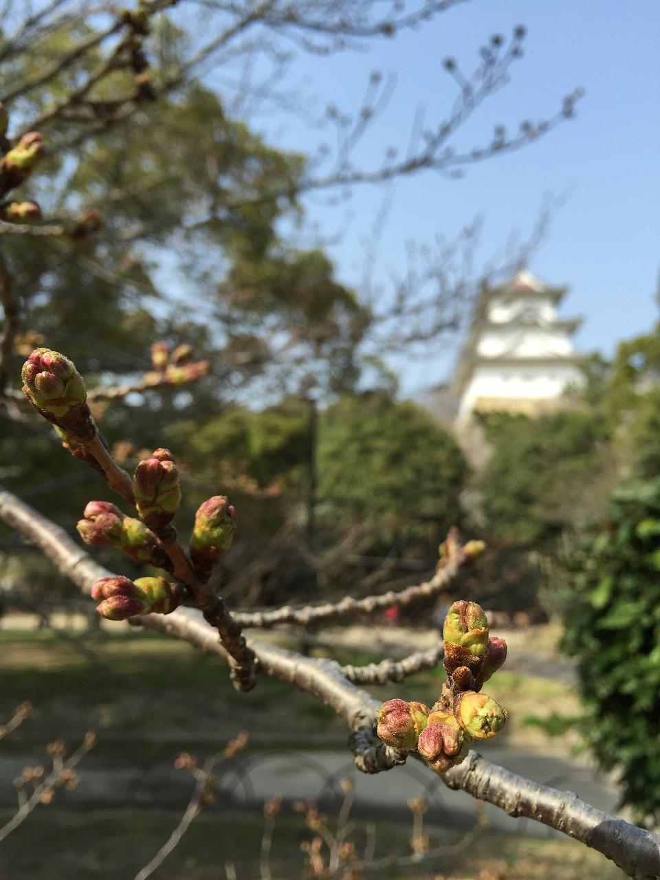 明石公園。