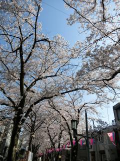 花と緑の遊歩道