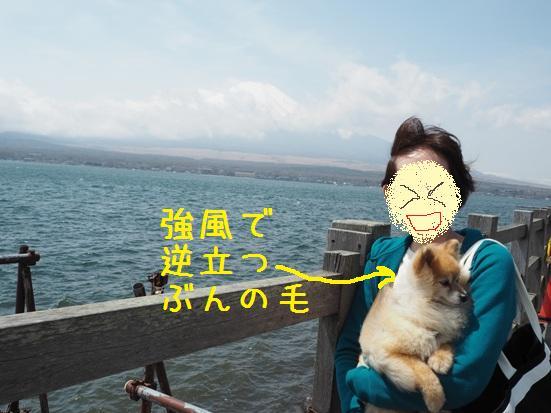 すごい風!