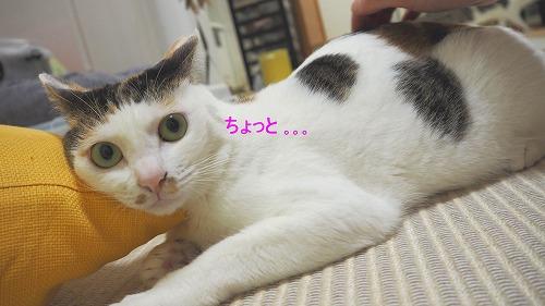 s-P6181766-2.jpg