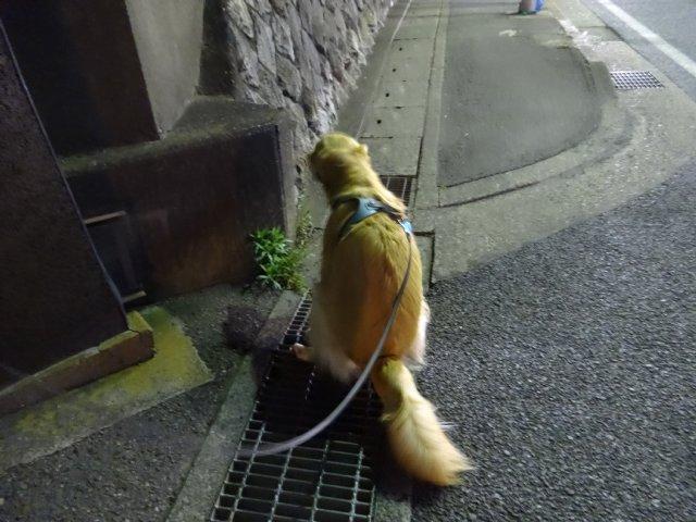 水洗でんちゅけ04