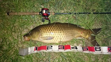 T 川 65 cm 4.5 kg (1)