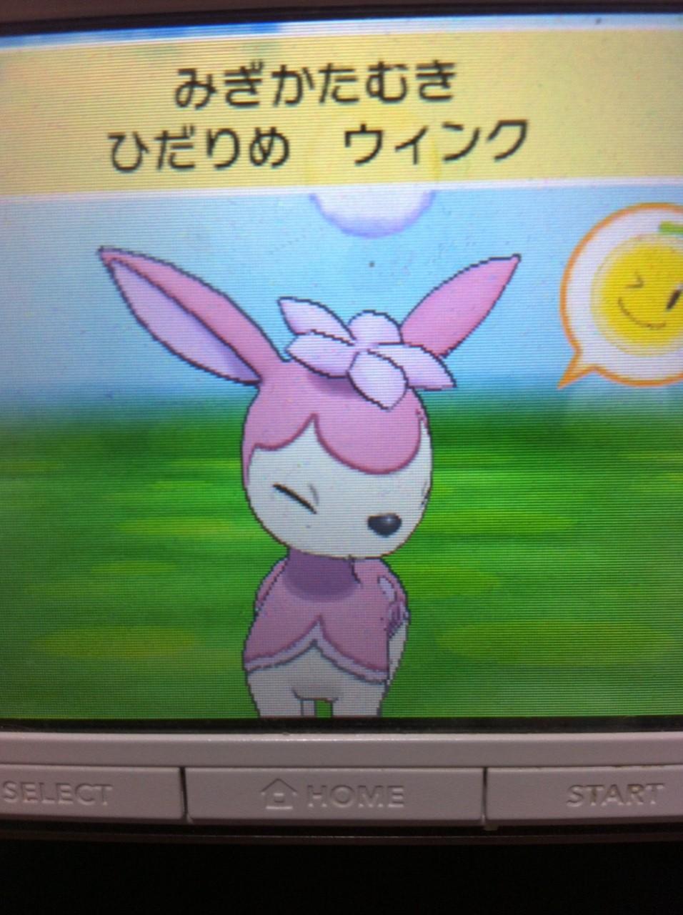 シキジカ(春)