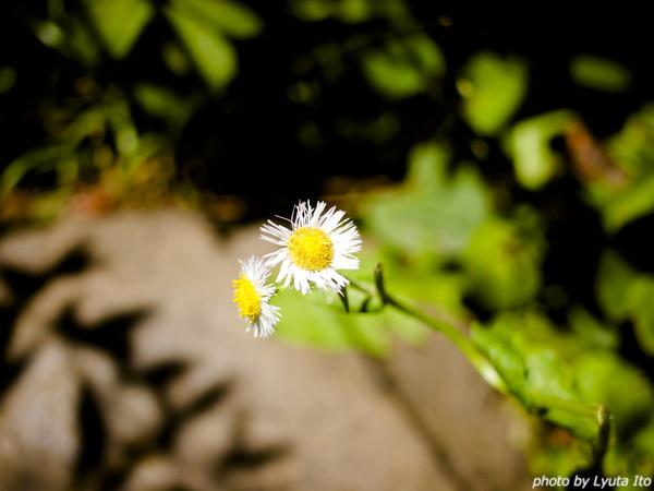 20150513-P5133953.jpg