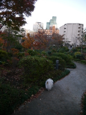 2014六本木9