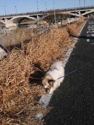 初散歩10