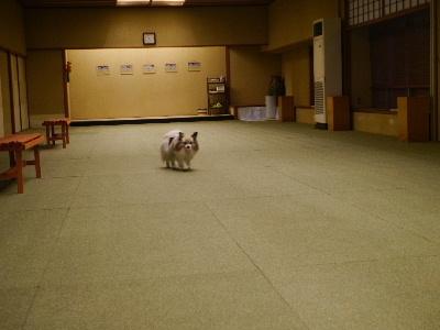 2014伊豆旅行5−20